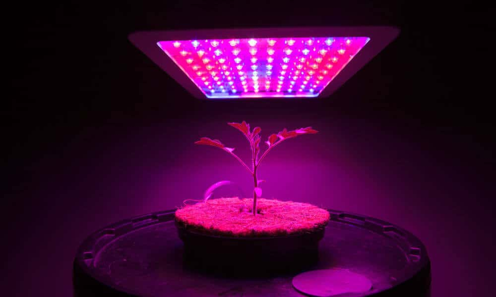 best-led-grow-lights-for-weed-hero
